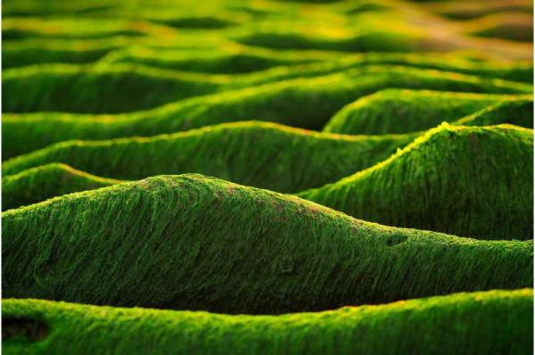 印度开发藻类生物柴油 可能是未来最好的环保燃料之一