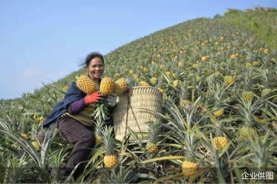拼多多发布2020年年报:年活跃买家达7.884亿,创建全球最大农产品零售平台