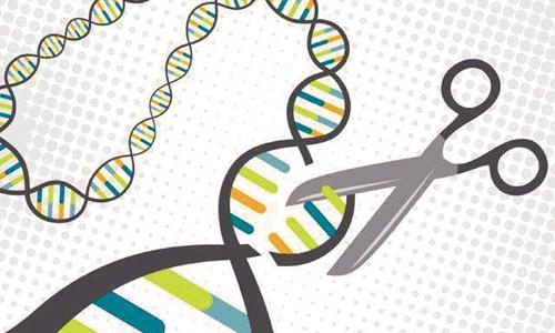 基因编辑 几分生意几分经