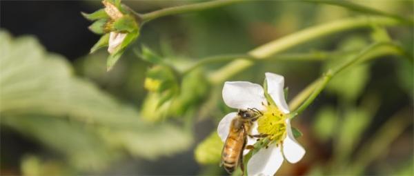 全球昆虫数目减少!40%物种未来几十年内灭绝而蟑螂则大量繁殖