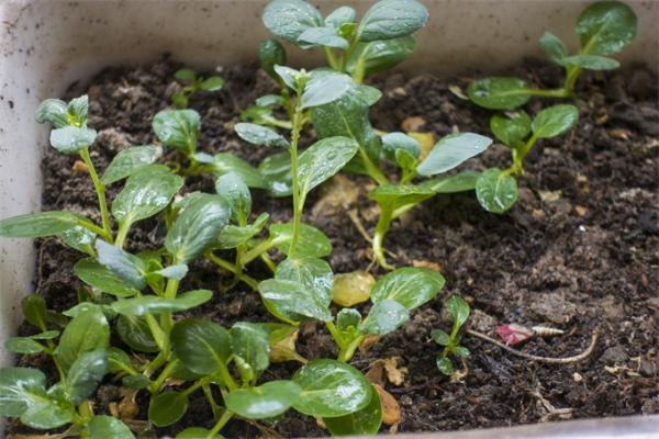 移民火星后只能吃虫子?你或许还可以吃到自己亲手种植的蔬菜