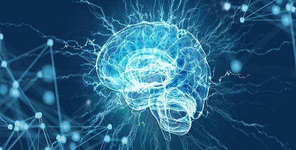 """科学家绘出大脑决策区域的分子3D地图 进一步了解为什么会""""上瘾"""""""
