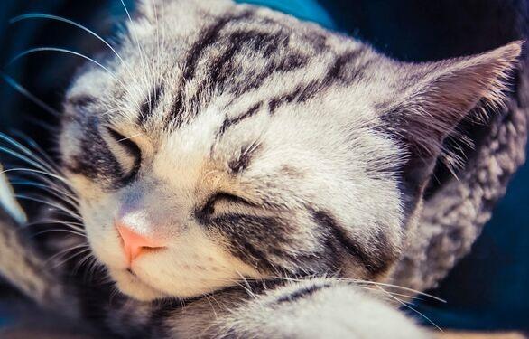 猫咪不如狗狗粘人?研究发现猫能像狗一样与铲屎官亲密无间
