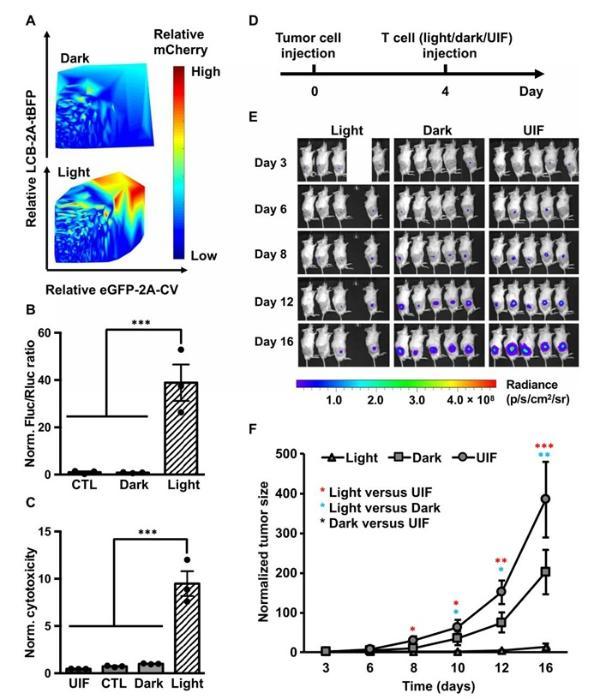 """肿瘤免疫治疗新突破:用""""光""""就能精确杀伤癌细胞"""