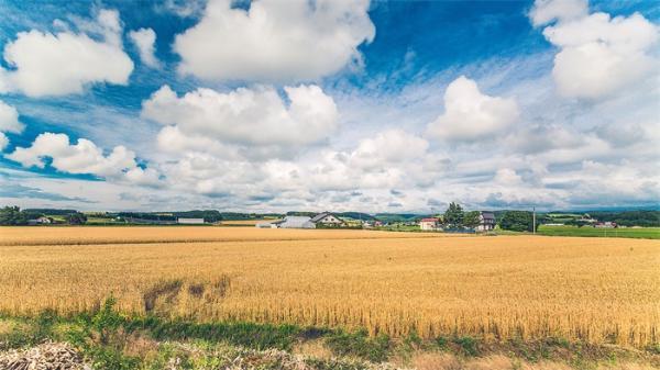 气候变化会导致北方出现更多耕地,但也有着相应的环境代价