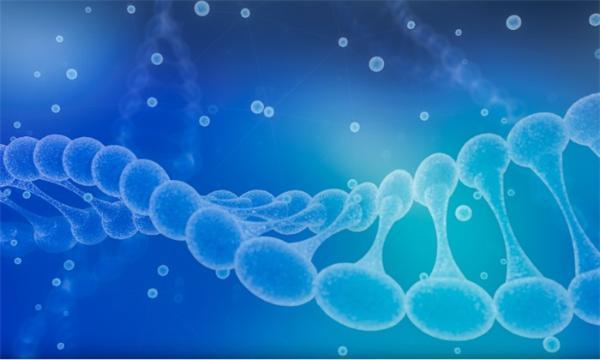 人类心脏发育的空间细胞图谱绘制成功 样本有限不再是基因研究障碍