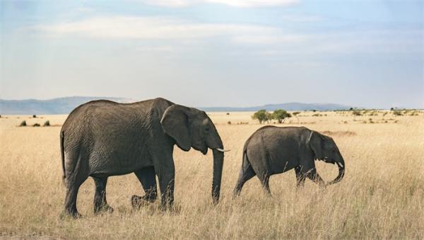 与人类一样,雌性哺乳动物也更长寿 平均寿命比雄性高出18.6%