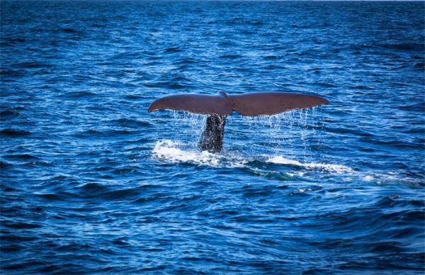 南海首次发现鲸落 它曾被誉为世界上最浪漫的死亡