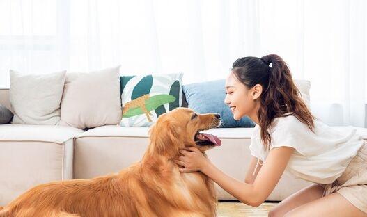 心疼!疫情期间被遗弃宠物增多 多地出台规范不得虐待、遗弃犬只