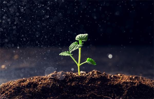 """人造""""叶绿体""""实现人工光合作用登上《科学》!可捕获和转化CO2 未来生物技术应用广泛"""