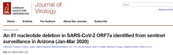 研究团队发现:新冠病毒积累了全新的特殊突变,或为其感染机制提供线索