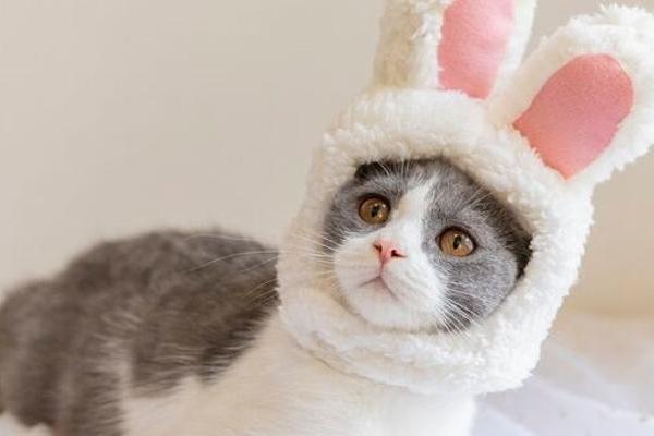 《新英格兰医学杂志》重磅研究:猫高度易感新冠病毒,...