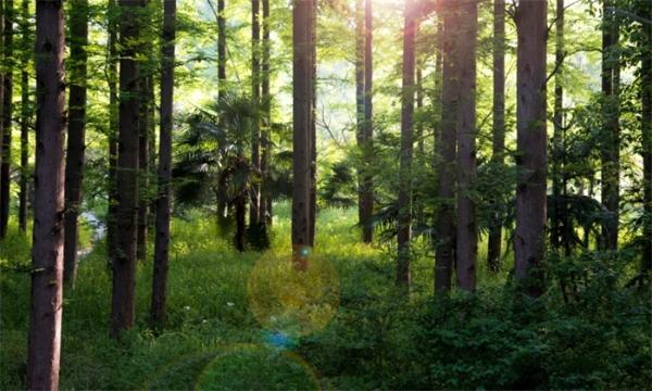 比恐龙早1亿年!我国发现迄今最早远古森林