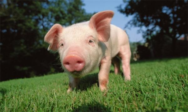 "CPI重回""2时代""!猪肉价格连跌14周 5月环比下降8.1%"