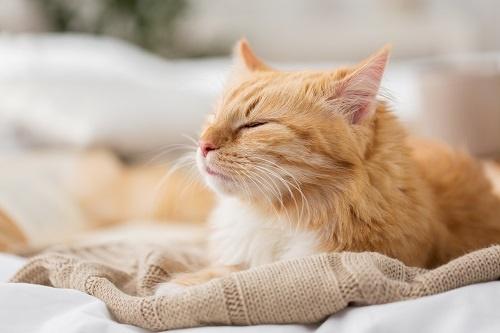 违背常识!新研究:午睡时间过长增加患心血管疾病的风险