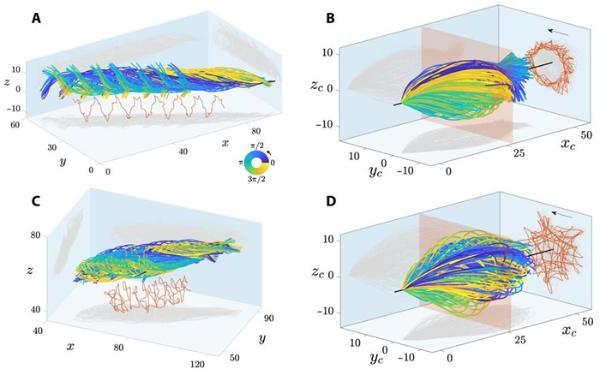 人类精子究竟是如何游动的?3D镜像显示其不对称地旋转前进 科学家们弄错了300多年