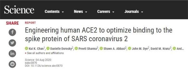 新冠病毒太狡猾?科学家正开发有效诱骗物:中和病毒防止细胞感染