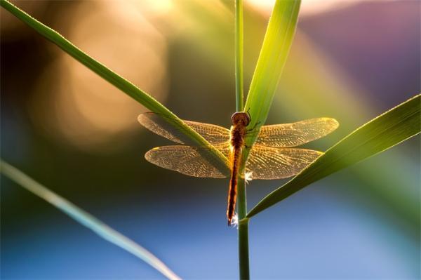 """杀死""""超级细菌""""!科学家从蜻蜓翅膀的纳米粒子获得灵感,开发出新型抗菌表面"""