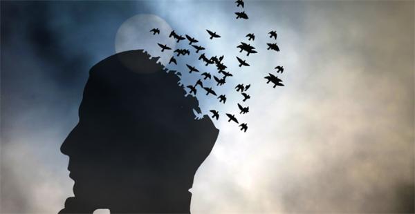 乌鸦喝水不是骗人!科学家发现部分鸟类大脑结构与灵长类相似,可产生初级意识