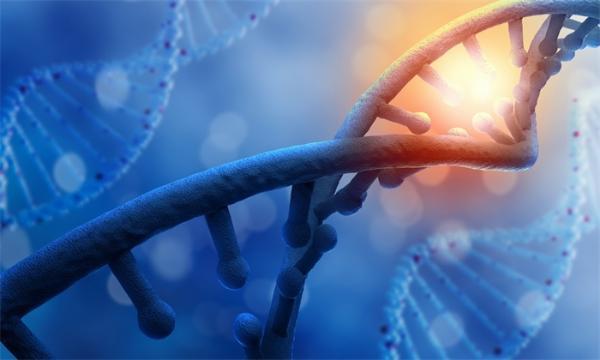 病毒在人类的进化过程中起着重要作用,那新冠病毒呢?