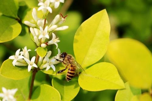 不影响健康细胞!研究发现蜜蜂的蜂毒素可用于治疗乳腺癌