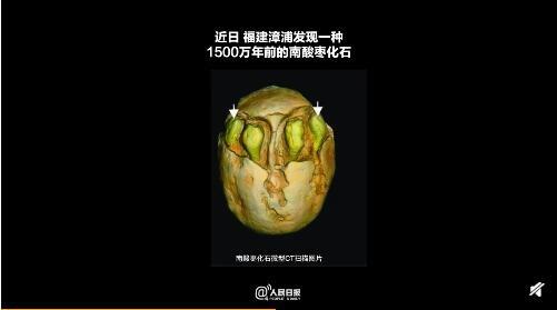 形态更多样!1500万年前的枣被发现 有7个萌发孔与现代南酸枣不同