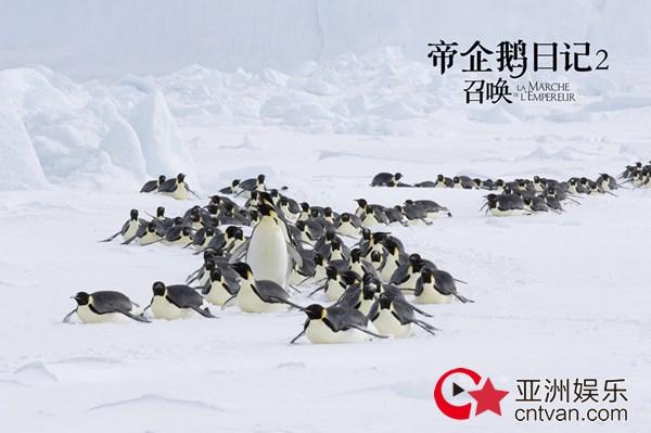 经典纪录片《帝企鹅日记2》即将上映 原班人马升级呈现南极奇观