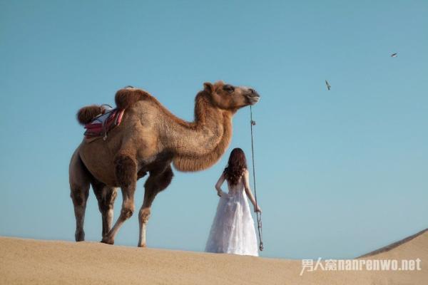 沙漠骆驼歌词的意思 沙漠骆驼歌曲唱出不一样的人生旅途