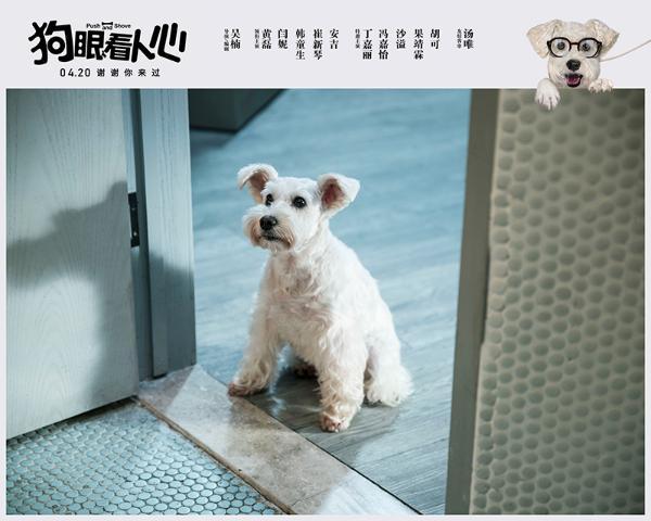 """《狗眼看人心》曝""""不要伤心""""版预告 爱犬催泪告白黄磊闫妮"""