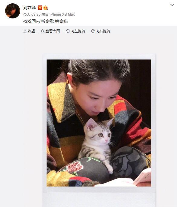 刘亦菲晒与小猫合影 美女配萌宠画面软萌温馨