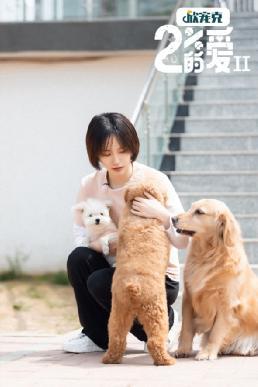 《百分之二的爱2》上星北京卫视 成果用爱守护流浪动物