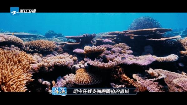 """《奔跑吧9》开启""""夏日消暑""""之旅,实际行动保护海洋生态"""