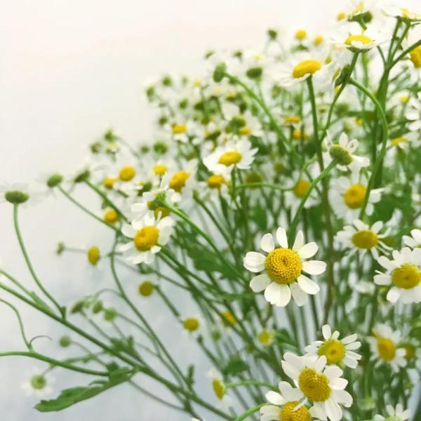 春天最佳护肤季节,如何快速拥有水光肌!
