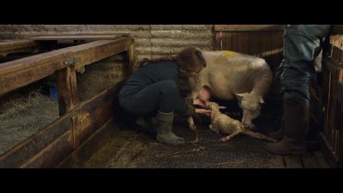 A24发布悬疑恐怖片《羊崽》预告 将于10月8日正式上映