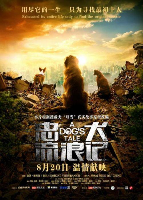 搜救犬叮当真实原型改编 《忠犬流浪记》 8月20日催泪上映