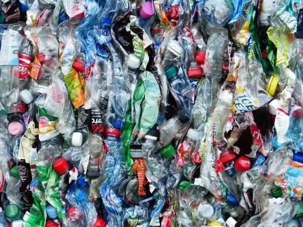 《自然》的出版:瓯海神草可以吞下海底微塑料 扔到海里