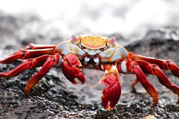 《自然》旗下期刊:加拉帕戈斯群岛生物异常丰富之谜解开了