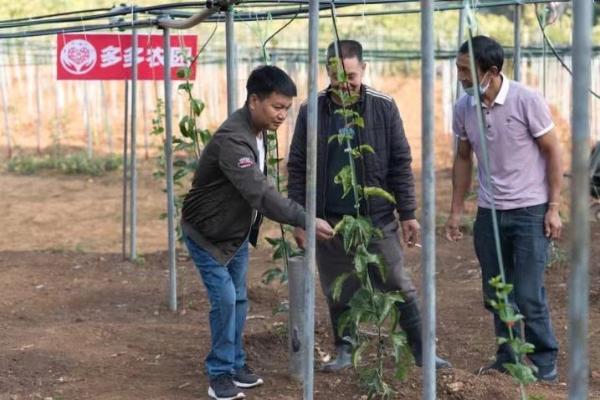 拼多多精准助农为德宏乡村振兴注入新动能