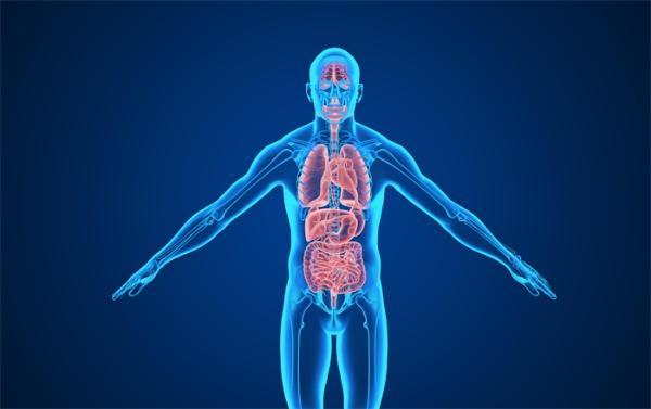 清华大学团队在类器官研究领域取得突破,成果登上《细胞》子刊