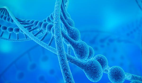 国际联合研究:发现整合素和踝蛋白新功能,助力开发个性化癌症治疗手段