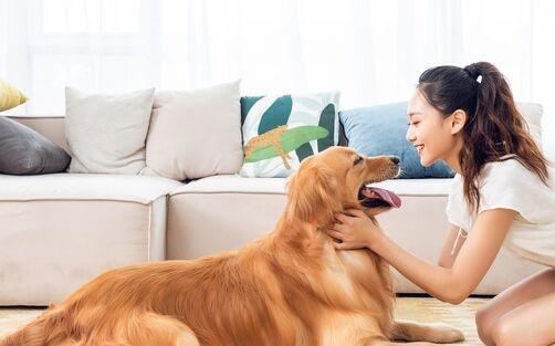 文明养犬!济南拟规定遗弃犬只罚款两千元 不及时清除犬粪罚500元