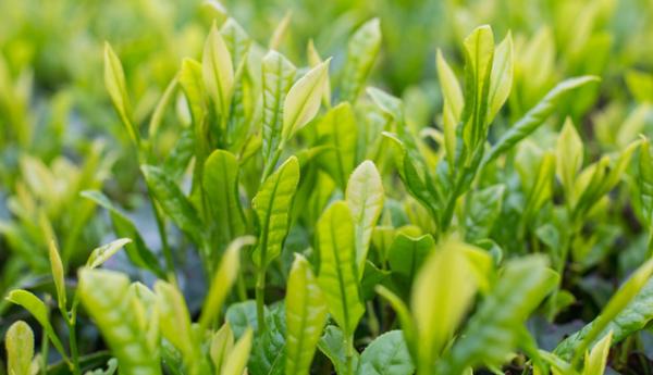 《科学进展》:若持续稳定升温,植物吸收CO2的能力将在20年内减半