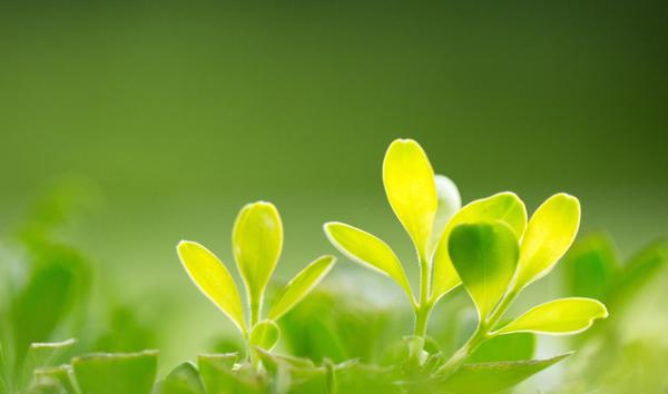 子问题《自然》: CRISPR-Cas9基因编辑工具可以随意编辑植物基因