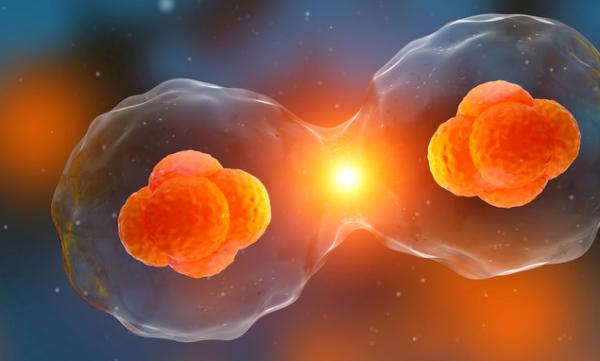 《应用表面科学》:向细胞内输送外部分子,新氧化钛纳米管将更高效经济