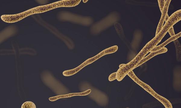 《基因与发展》:发现线虫补充钼辅因子机制,或可用于治疗人类神经疾病