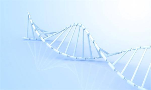 《自然》:人类首次观察到完整的DNA修复机制