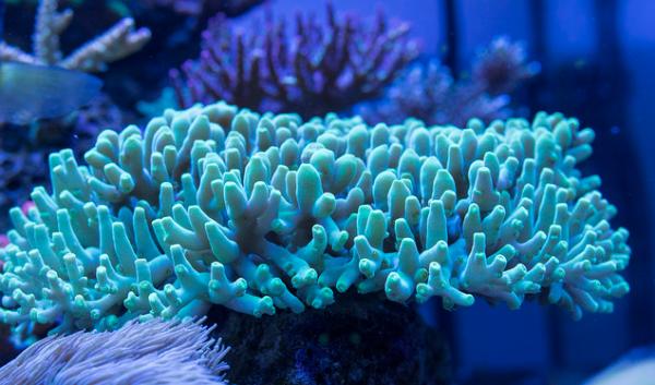 《植物与细胞生理学》:从蓝藻中提取藻蓝胆素更加方便快捷,动物实验表明,有望用作食品着色剂和具有抗炎抗氧化特性的药物。</div><font dir=
