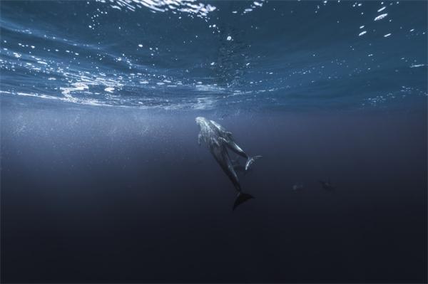 """""""安静""""的海洋:疫情期间海洋中的人类噪音水平降低了20%"""