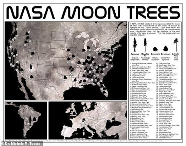 50年前,绕月环游34圈的树种在地球生根,但幸存的月球树不过50余棵