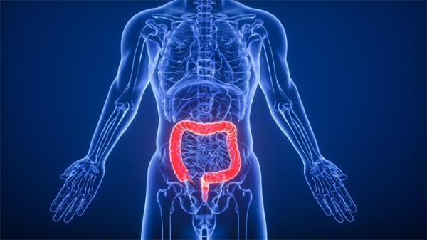 关注炎症性肠病:科学家发现新方法可指示免疫细胞帮助修复肠道内受损组织